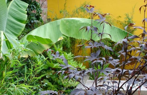 kwai's space: an artist's chinese stroll garden