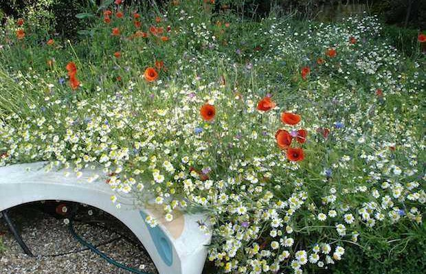 planting tiny meadows: are you nectar rich?