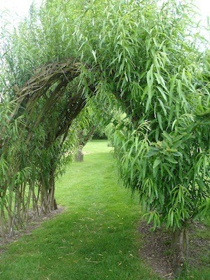 are you nectar rich living willow arch
