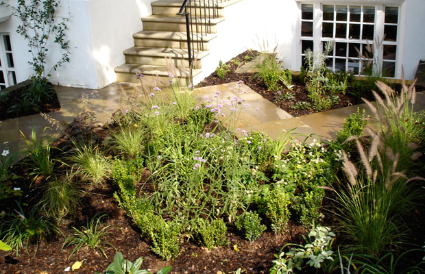 Box hedging parterre in front garden with zig zag path by Carol Whitehead garden design