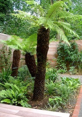 lost island tree fern triplet