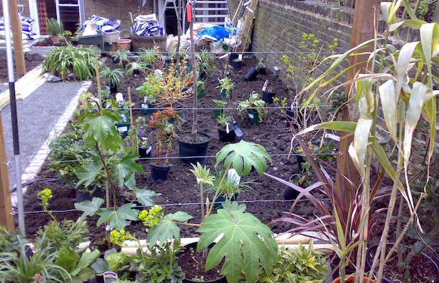 Setting out the plants prior to planting - Carol Whitehead garden design