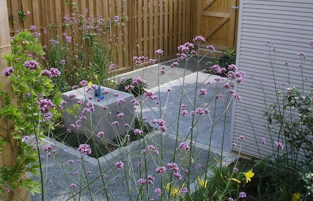 Verbena bonariensis up close, grey paths behind - Carol Whitehead garden design