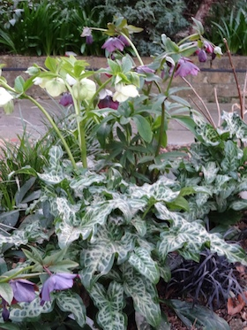 hellebores and arums