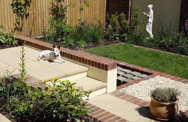 Jack Russell dog enjoys the terraced patio - Carol Whitehead garden design