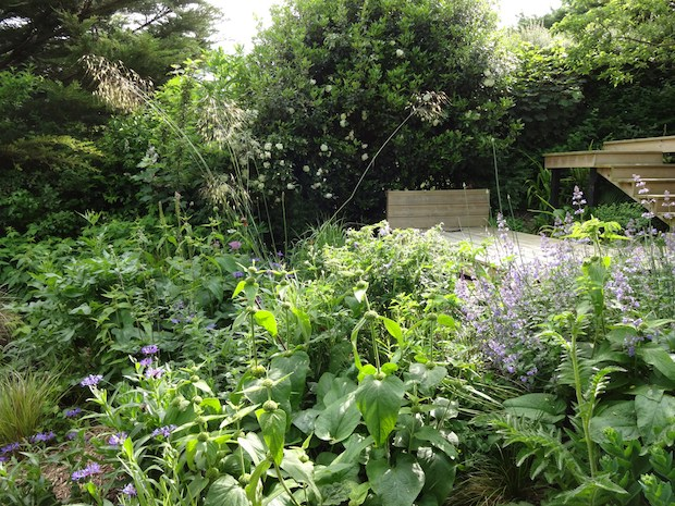 carol whitehead creates beautiful planting designs in sussex