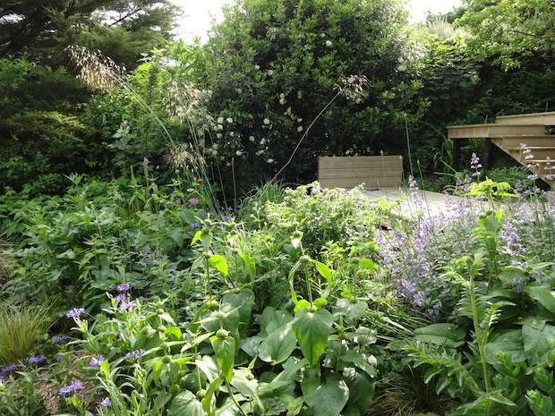 carol whitehead creates beautiful planting designs