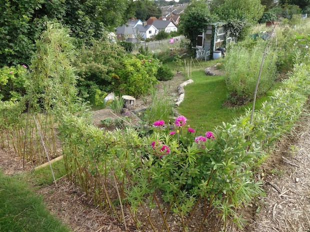 a living willow garden at seaford allotments