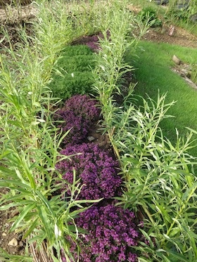A living willow garden at the seaford allotments seat planted with herbs