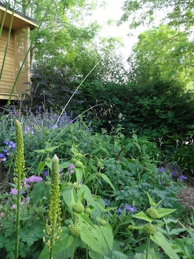planting on slopes carol whitehead garden design sussex