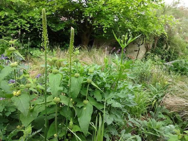 planting-sloping-gardens