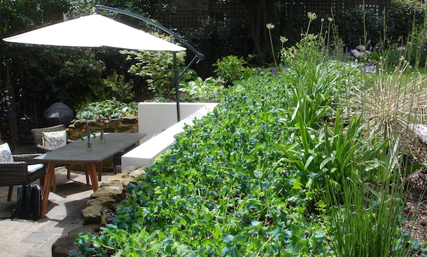 sunny patio with wall, planting and sun shade