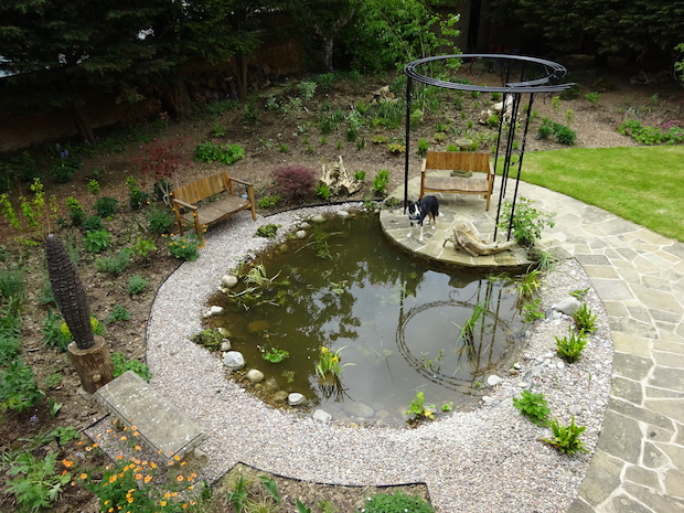 overview of wildlife pond and pergola
