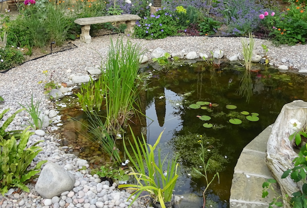 wildlife pond with gravel surround